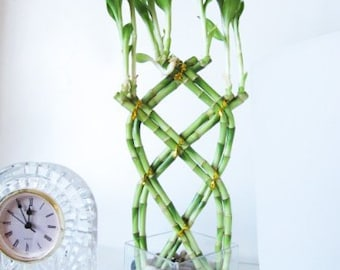 Live 8 Hand Braided Lucky Bamboo w/ Pebble & Glasses Vase - Free Shipping - Nice Gift