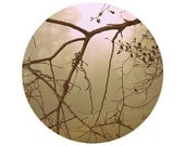 Fall Photograph, Autumn Home Decor,  BRANCHES.  Circular woodland photo.  Woodland, pastel, foggy, nature, home decor.