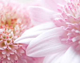 Nursery Art Pastel Flower photograph Digital Download Fine Art Photography pink flower pastel photo print wall art