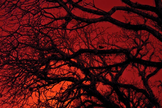Red Wall Art items similar to red wall art red sky photo 8x12 bare branches