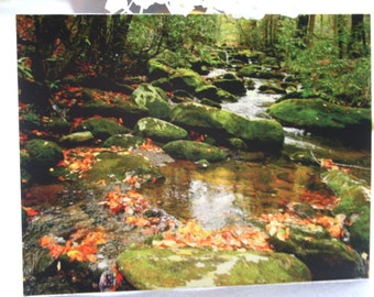 Photo Note Card of a Mountain Stream in the Smokey Mountains