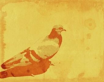 "Posterized Pigeon 11"" x 14"" Print"