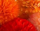 Tissue Paper Pom Poms set of 40 Poms Decorations//Ceremony//Parties Decor//Weddings