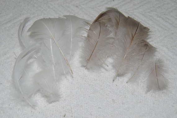 White and grey duck fluff feathers
