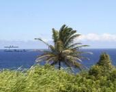 Art photography of palm tree and coast of Maui, Hawaii. Vibrant blue sky. On the Road to Hana.