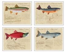 "Trout & Salmon Collection - Four 8"" x10"" limited edition prints by Matt Patterson, trout art, trout prints, fishing art"