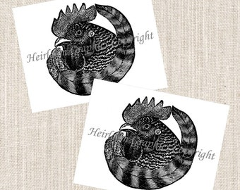 Rooster Notecards - Set of 10 Cards & Envelopes - Vintage Farmhouse Rooster Barnyard Notecards