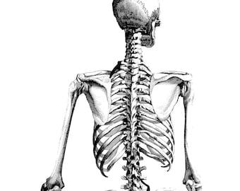 Human skull, Medical illustration, Poster anatomy, 05