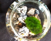 living marimo pet moss ball in mystic merlinite and rhodonite crystal cavern terrarium