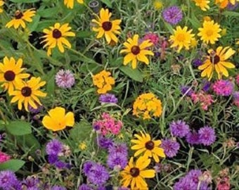 2,000 Wildflower Mix Seeds, Cover a Large Area, Attracts Butterflies