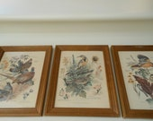 RESERVED FOR CYNDI Antique Arthur Singer Painting Set of 3 Bird Print Picture Series Number 3 , 7, 8