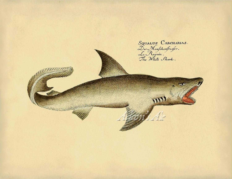 Uncategorized Shark Images To Print the white shark art print or poster shark