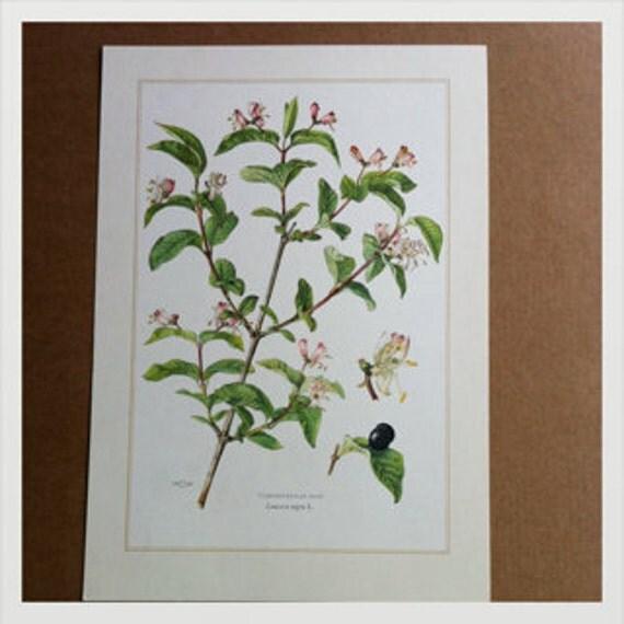 Genuine Vintage botanical print, double sided botanical print, screen print