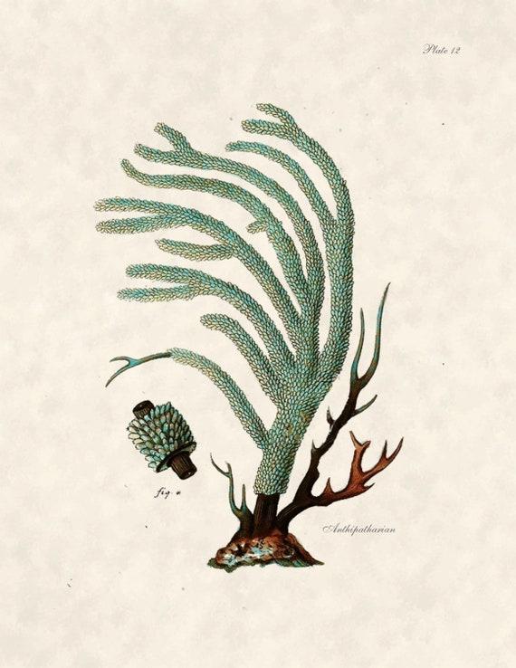 Etsy Coastal Wall Decor : Items similar to beach decor coral illustration