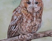 Tawny Owl - Limited Edition Watercolour Print