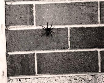 Creepy Spider Fine Art Photograph