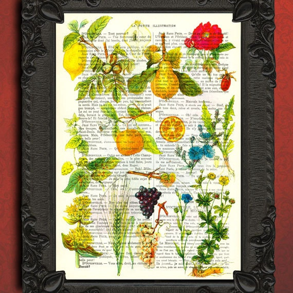 Fruit Print Botanical Print Kitchen Decor Fruit Chart Book