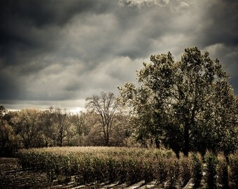 Landscape Photography - Corn Rays - None Such Farms, Bucks County, Pennsylvania -  8x12