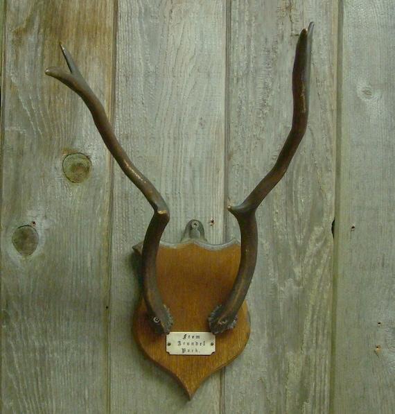 Vintage Deer Antelope Mounted Trophy Antlers From Arundel Park