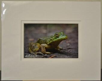 SALE - 4x6 print, white double mat - photograph - fine art - Yellow Eyes - Frog - Columbia River Gorge