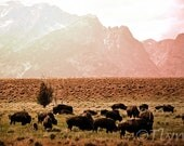 Dreamy Buffalo