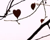 Set of 6 Postcards -5x7 Hanging Hearts- Stationery for Fall Lovers and Valentines