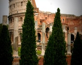 The Colosseum in Rome Behind Cypress Trees 8X10 Photograph