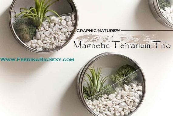Graphic Nature Magnetic Terrarium Trio Kit