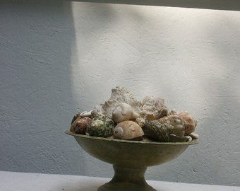 Seashell and Coral Urn