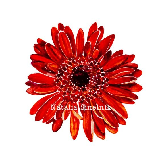 Red gerber daisy digital download from original watercolor daisy flower clipart on paper