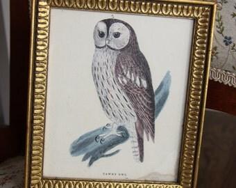 Vintage framed print of Tawny Owl E.A. Riba Co., Inc Brooklyn, NY
