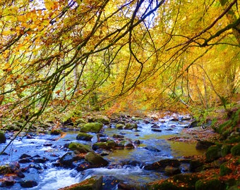 Birks of Aberfeldy Forest Autumn Fall Landscape Photography Art - 8 x 10 Photo Image