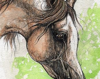 the  arabian horse watercolor painting