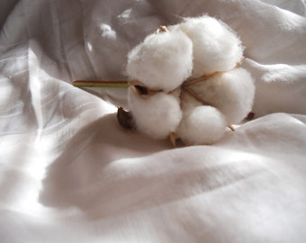 25 Raw Cotton Stems for Weddings and Decor