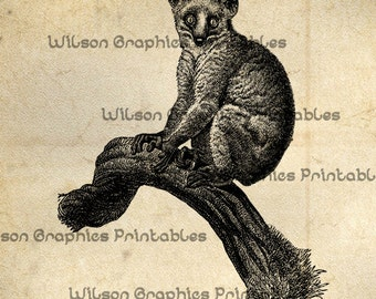 Vintage Potto Primate Illustration for Scrapbooking Print and Craft Projects
