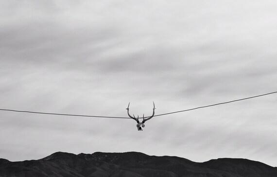 skull, deer skull, black and white, landscape, photography, art