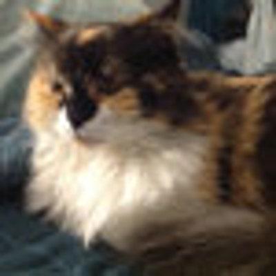 cobaltcat