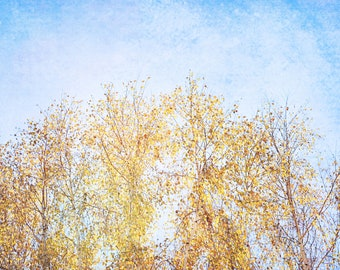 Nature Photography - Autumn Birch Tree Fine Art Photography- Fall Colors, Leaves, Nature, Yellow, Blue Sky, Dreamy Wall Decor