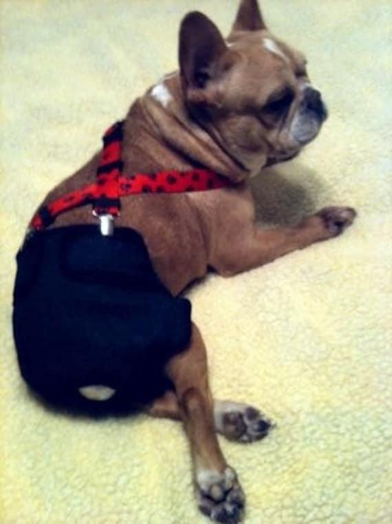 Designer Doggie Diaper Suspenders Guaranteed To Keep By