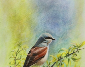 "SALE 50% OFF - Original - Sparrow - watercolor painting, 8"" X 16"" , Sparrow, Nature"