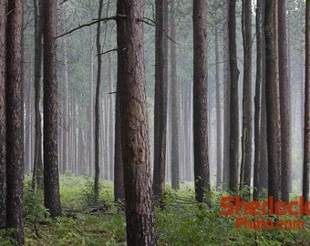 Rainy Day in the Woods - Image 01706