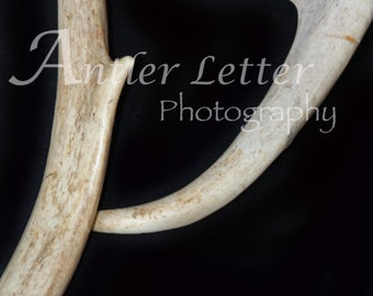 SALE-Letter P Antler, Whitetail Buck Shed, Photography, Alphabet, Hunting