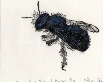 Blue Orchard Mason Bee, Osmia Lignaria Linocut - Pollinator Bee Biodiversity Print Collection Lino Block Print