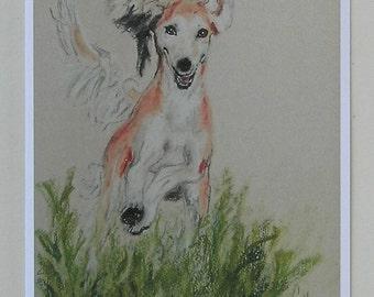 Red Fringed Saluki Hound Dog Art Note Cards By Cori Solomon