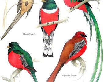El Quetzal Bird Clip Art – Cliparts