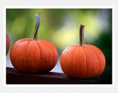 Autumn Decor, orange, green, pumpkins, The Uphill Battle, seasonal fine art photography print 8x12