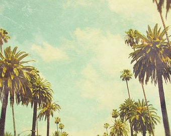 BLACK FRIDAY California Photography, Palm Trees, fpoe, Wall Decor, Green, Los Angeles, Shabby Chic - Postcards From Cali  Fine Art