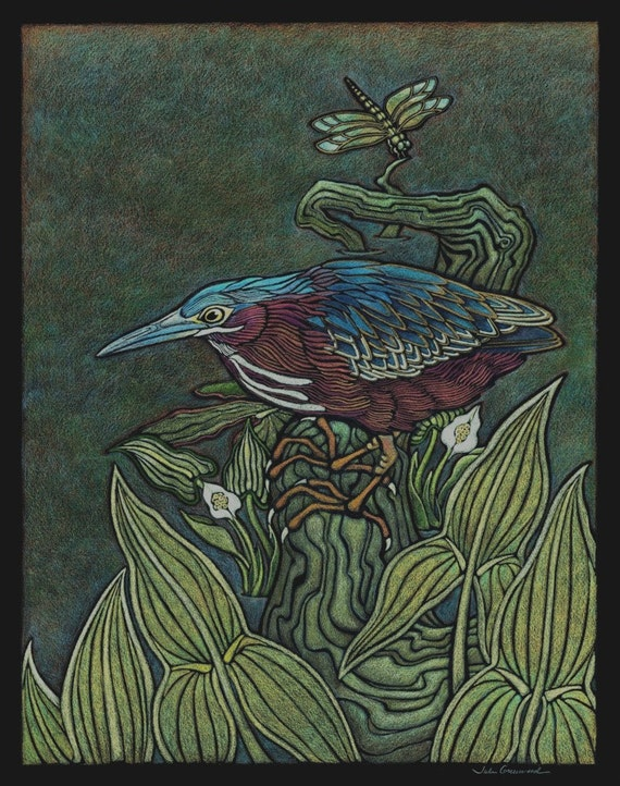 Green Heron, Widow Skimmer Dragonfly, Water Arum, Arrow Arum, Minnesota Species Series