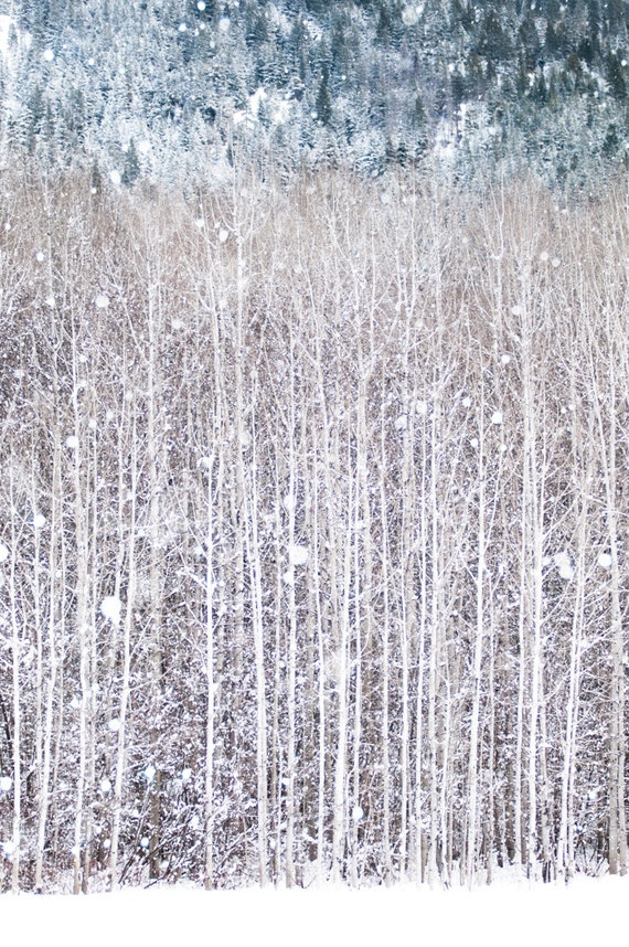 Winter Photography, Birch Trees in Snow, Nature Photography, Woodland Wall Decor, Large Wall Art