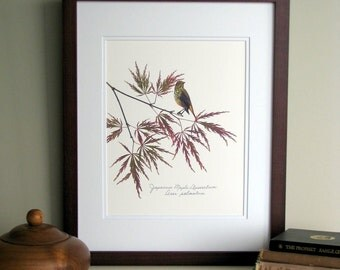 Pressed leaves print, 11x14 double matted, Japanese Maple leaves with bird on branch, wall decor no. 0020